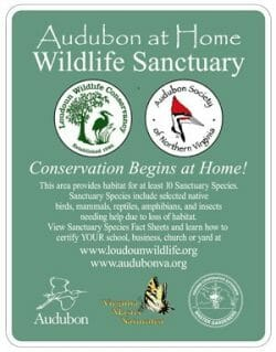 Little Huggers LLC accredited as Audubon at Home Wildlife Sanctuary